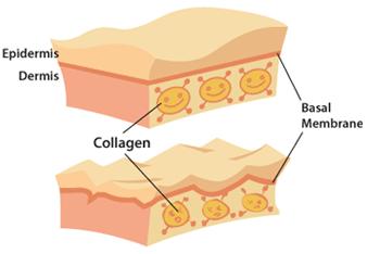 colagen