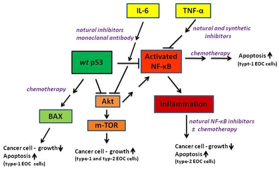 Nhiều chất trung gian trong phản ứng viêm là điều kiện hình thành và phát triển các khối u