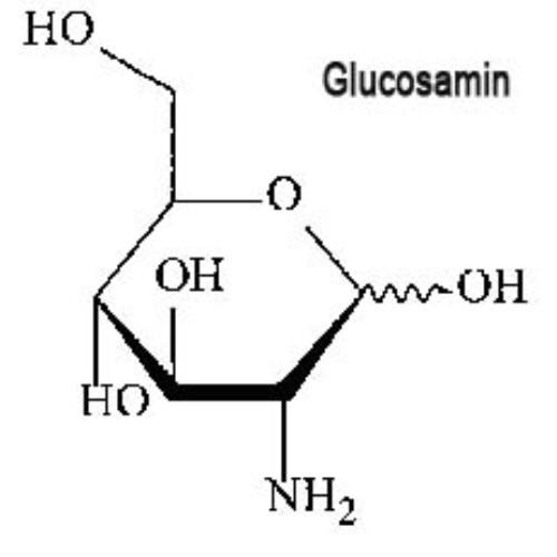 Do có nhiều ưu điểm, glucosamine ngày càng được dùng rộng rãi trong hỗ trợ bệnh lý viêm xương khớp, thoái hóa khớp