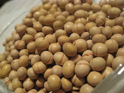 Mầm đậu nành giúp tăng cường nội tiết tố, hạn chế tình trạng khô và teo nhỏ âm đạo