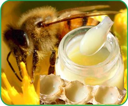 sữa ong chúa có nhiều tác dụng với cơ thể